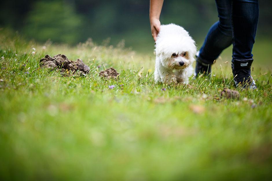 perro andando en una preboda en navarra