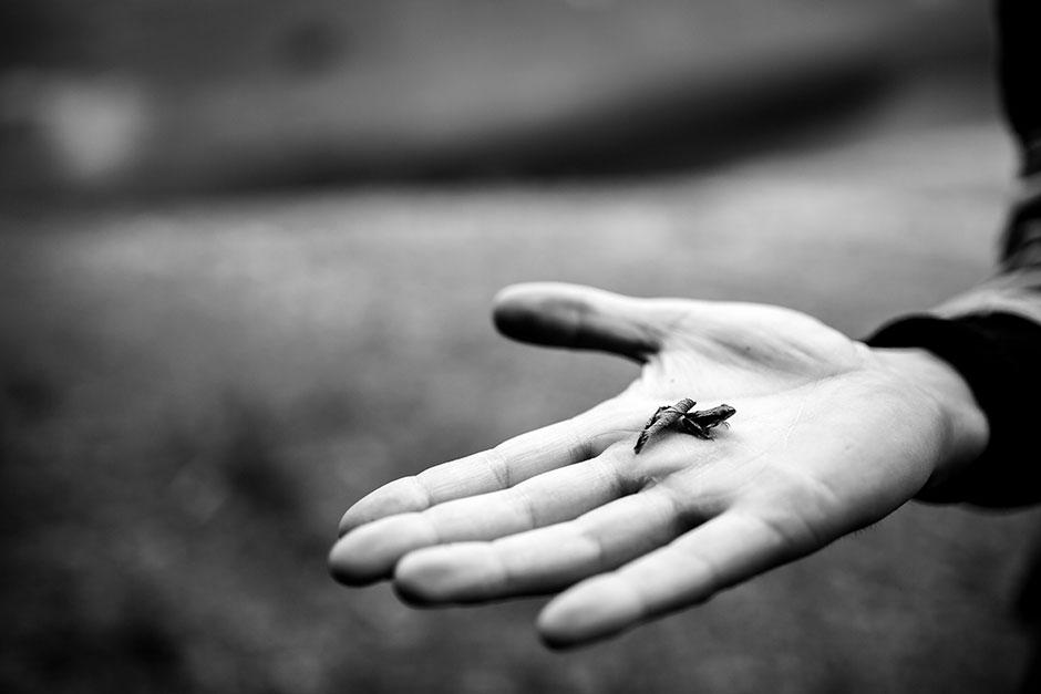 rana en la mano en una preboda en navarra