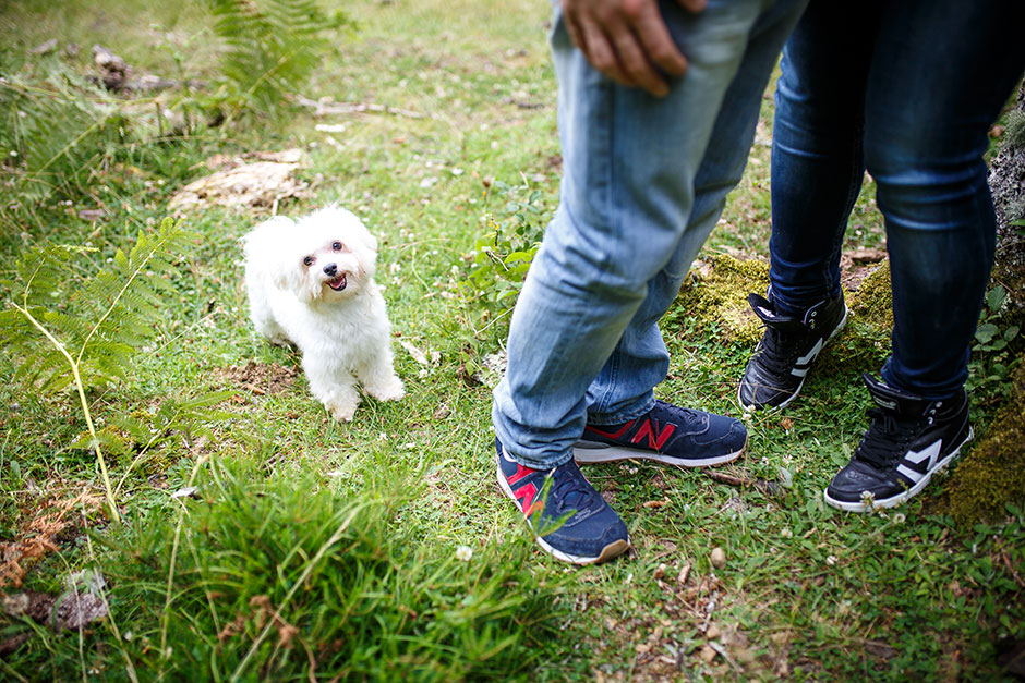 retrato del perro en una preboda en navarra