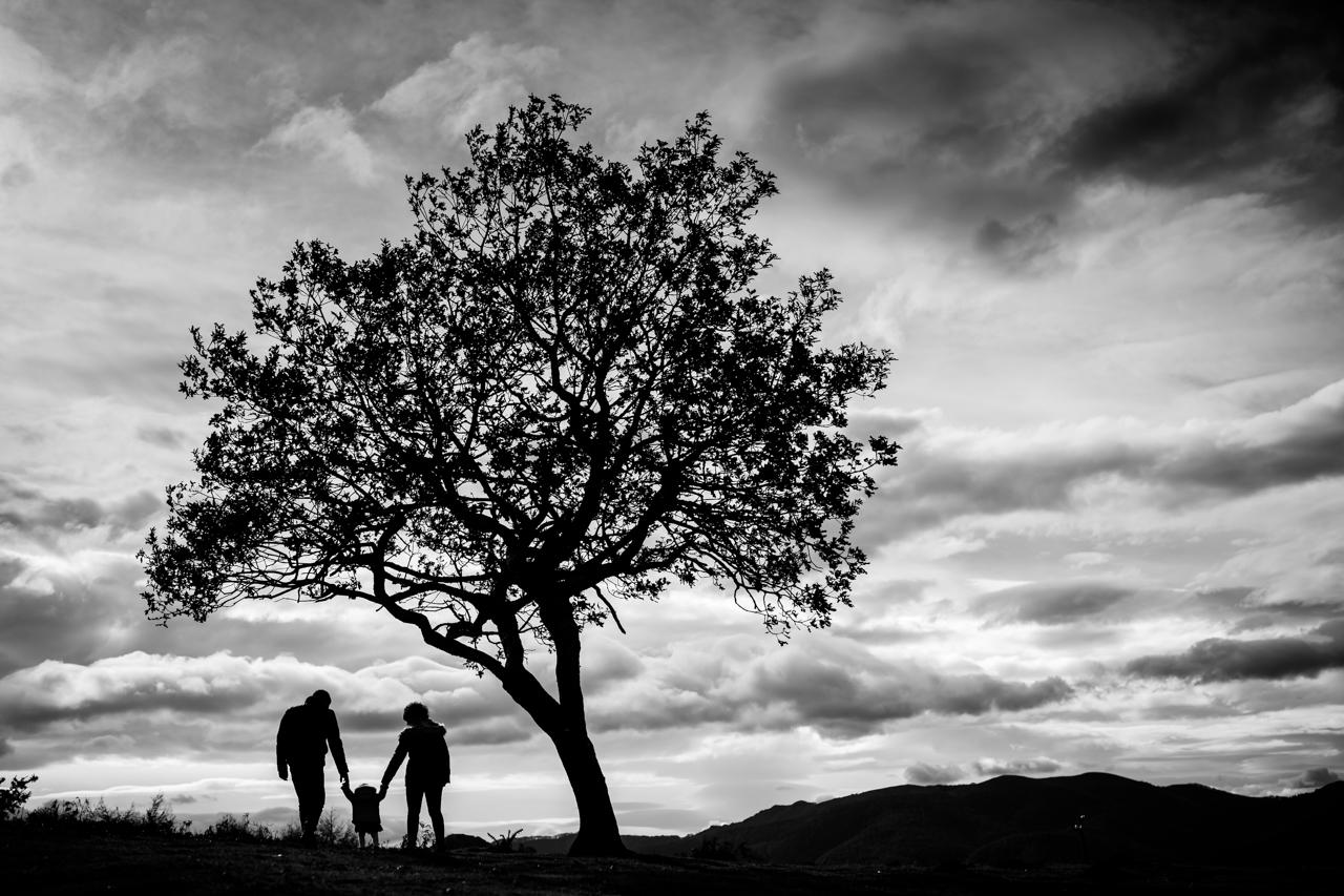 silueta de una familia a contraluz bajo un árbol