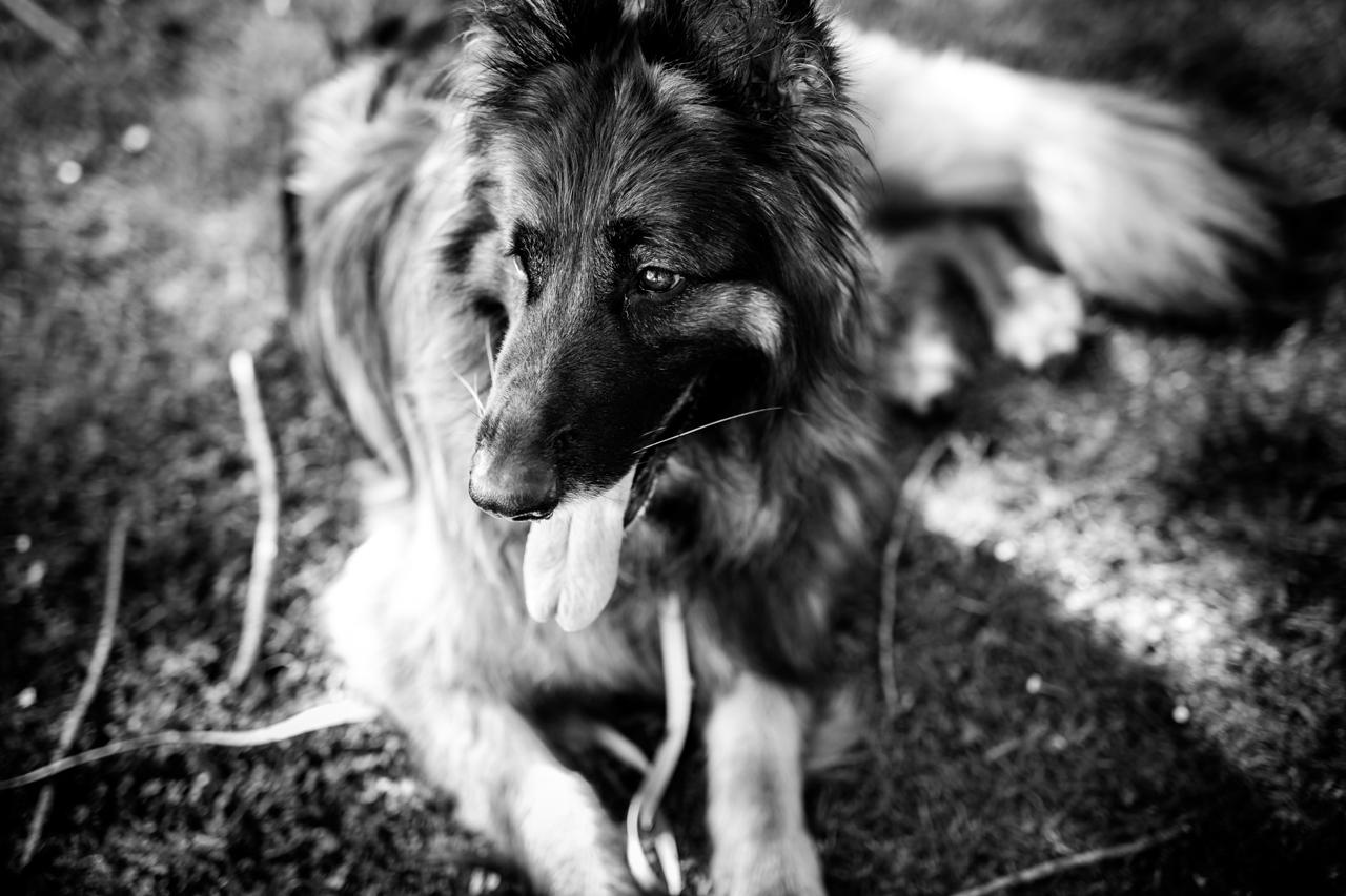 retrato en blanco y negro del perro de la pareja en un reportaje de pareja en erlaitz