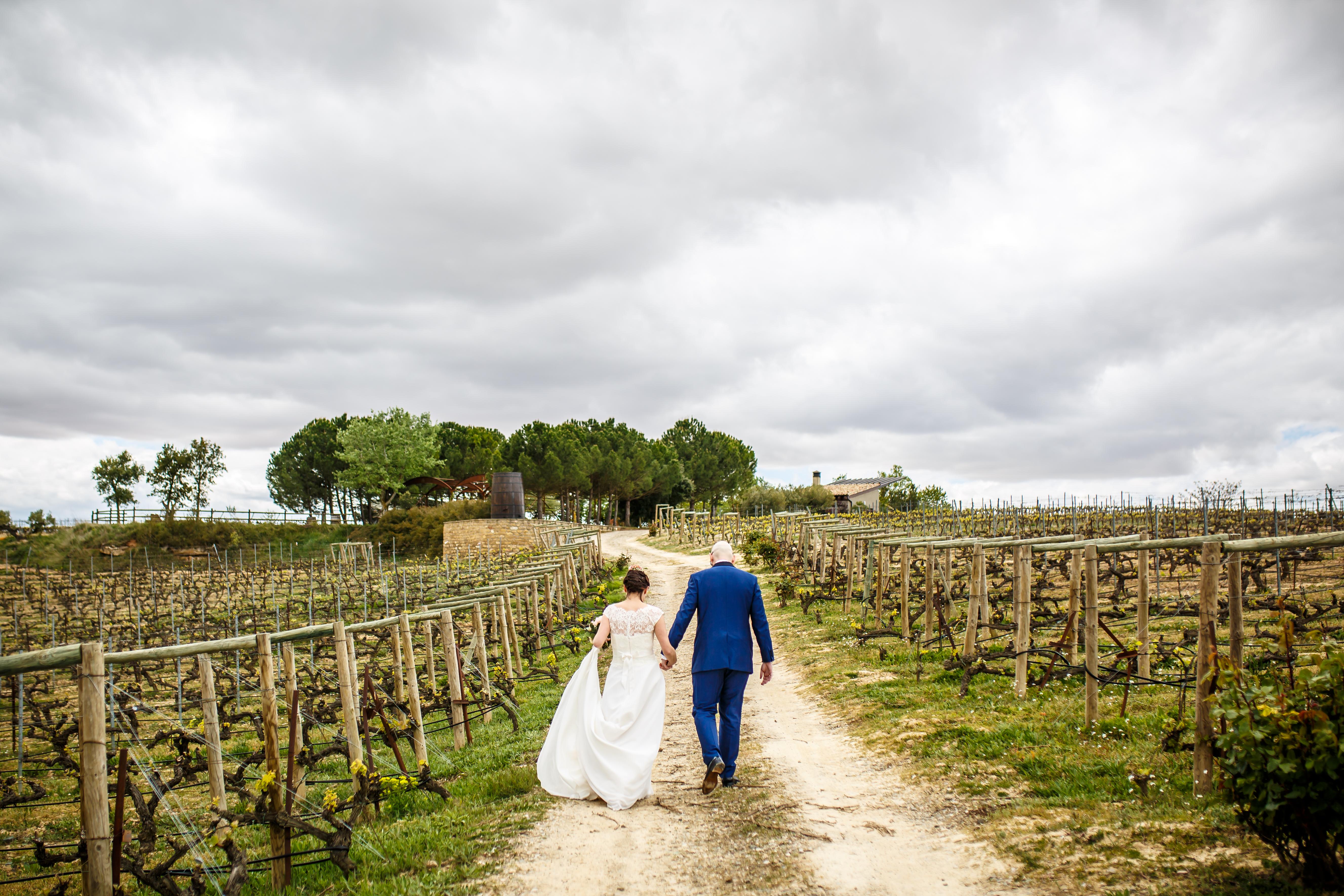 los novios pasean por unos viñedos en una boda en laguardia